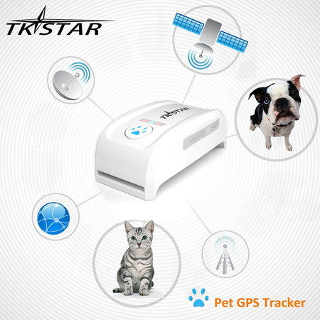 GPS Collar For Cats, With Dog And Cat In Photo