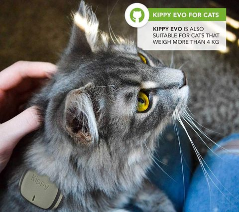 Small GPS Tracker For Cats With Green Exterior