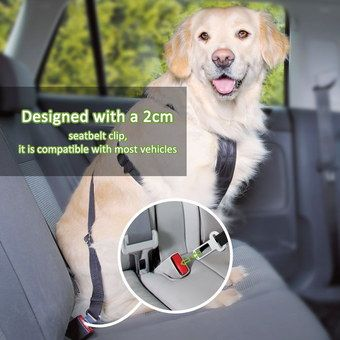 Heavy-Duty Car Restraints For Dogs Worn By Labrador