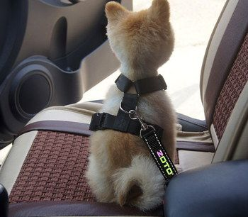 Car Harness For Small Dog With Yellow Logo